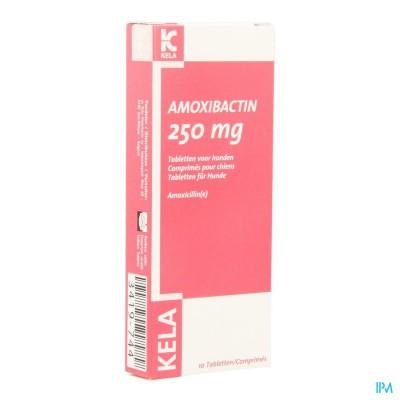 Amoxibactin 250mg Hond Comp 10